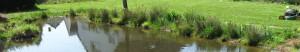 Ein natürlicher Übergang zwischen Wasser und Festland, hier haben auch Kleintiere die ins Wasser gefallen sind eine Chance wieder lebend an Land zu kommen.