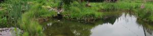 Natürlich bewachsenes Ufer eines Naturteiches, hier fühlen sich Frösche, Insekten und viele Kleinlebewesen richtig wohl.