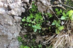 In den kleinsten Ritzen siedeln sich Pflanzen und Moose an