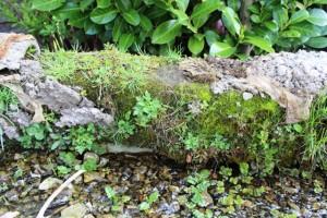 Die Natur erobert alles wieder zurück...