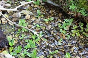 Die Gefällestrecke mit Kieselsteinen