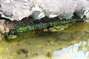 Auch am ersten Wasserfall bildet sich schon ein Pflanzenteppich